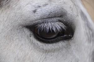 Ein Pferd :-)
